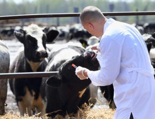 Metabolismo lipoproteico, adattamento epatico alla transizione e performance riproduttive nella bovina da latte: osservazioni preliminari