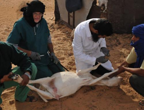 Progetto di formazione sulla cura ed il pareggio delle unghie dei piccoli ruminanti rivolto al personale veterinario nei campi profughi Sahrawi nel sud ovest dell'Algeria