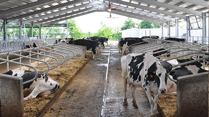 Tenere sotto controllo le emissioni di carbonio generate dagli allevamenti di bestiame