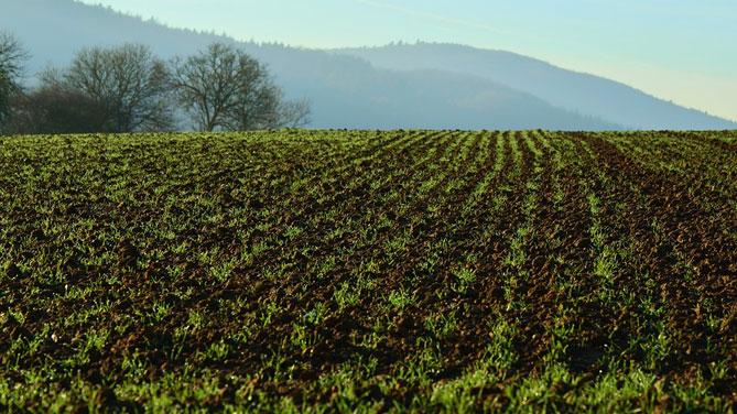 Risorsa agricole: Shaurli, approvato rendiconto fondo di rotazione