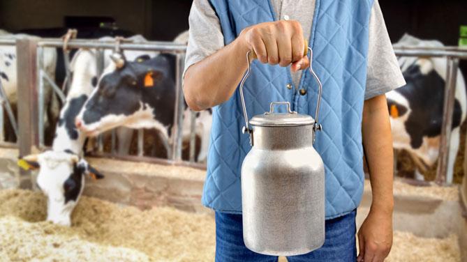 Il prezzo del latte spot in Italia e in Olanda