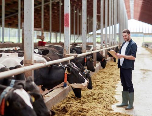 Livestock Smart Farming e Benessere Animale