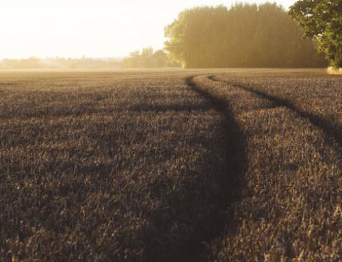 Emilia Romagna – Agricoltura. Prorogati i termini per aderire al bando di filiera del Programma di sviluppo rurale 2014-2020, che stanzia 136 milioni di euro per l'agricoltura e l'agroindustria