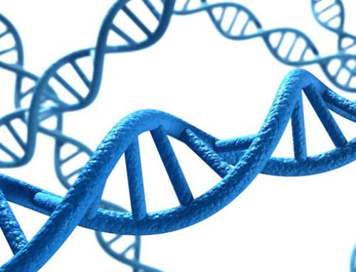 News nelle valutazioni genetiche della Holstein