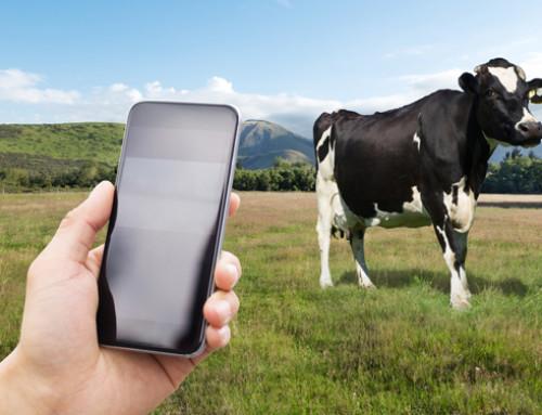 Il Metodo Montessori applicato alla vacca da latte