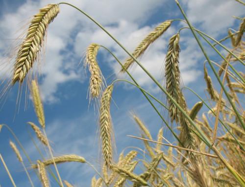 Import/export cerealicolo in Italia nei primi sette mesi del 2018