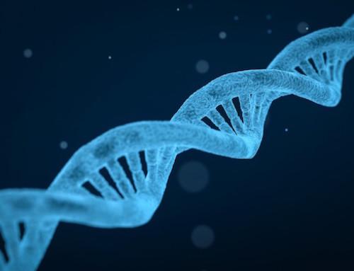 Ricerca, IZS delle Venezie: maggiore quantità di geni per resistenza ad antibiotici nel microbiota di onnivori e vegetariani