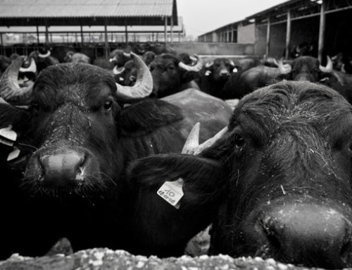ANASB diventa membro dell'International Buffalo Federation
