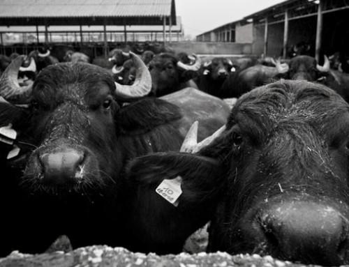 ANASB diventa membro dell'International Buffalo Federation