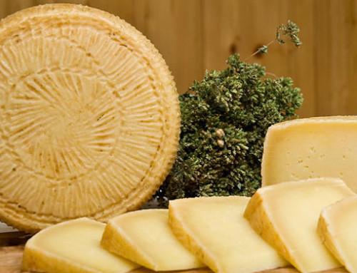 """Al via """"Precision Sheep"""", il progetto per migliorare la qualità del Pecorino Toscano"""