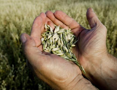Corteva: una nuova tecnologia per sementi fornirà colture più resistenti