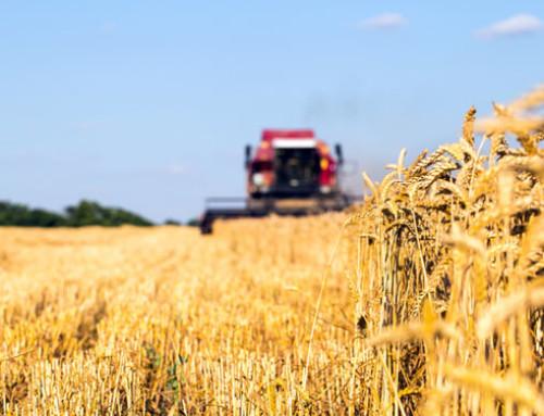 Eurostat: la produzione agricola totale nell'UE è aumentata dello 0,6% nel 2018