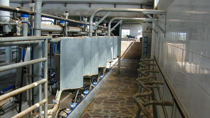 Specialisti nel settore Ovicaprino: GEA Farm Technologies ha studiato sistemi di mungitura professionali, specifici per limpiego su greggi grandi e piccoli.