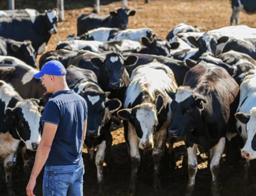 EMB: solo il 78% dei costi di produzione del latte è coperto per i produttori in Germania