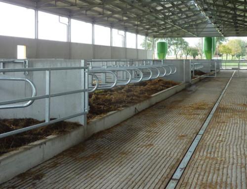 Una pavimentazione idonea migliora salute e produttività delle vacche