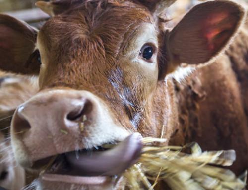La Commissione Europea pubblica una panoramica della fornitura di alimenti zootecnici dell'UE