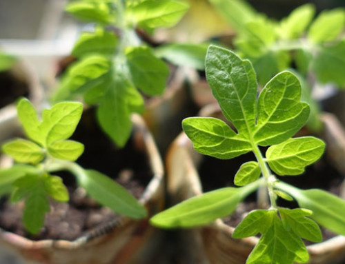 La Commissione europea interviene contro le frodi nei prodotti biologici