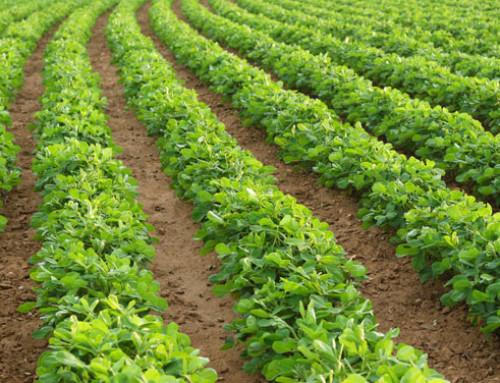 Dal CREA segnali positivi per l'agroalimentare nel 2018: crescono produzione, industria, export e si riduce il deficit della bilancia degli scambi agroalimentari