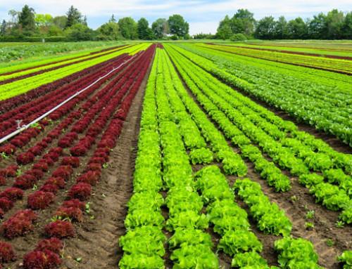 """BioFach 2020: cresce il biologico in Ue. FederBio """"Anche in Italia si punti a politiche a sostegno del settore"""""""