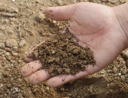 Emissioni di gas ad effetto serra, un'interrogazione alla Commissione europea sul carbonio organico del suolo nel regolamento LULUCF