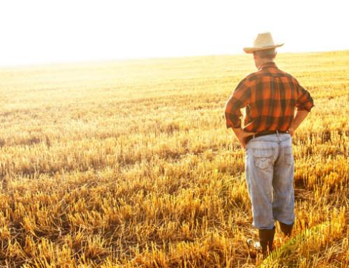 Consiglio di stato, sentenza su attività connesse riconducibili all'ambito agricolo e i presupposti