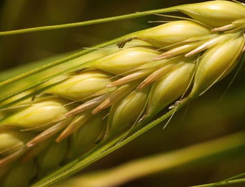 Anacer, import/export cerealicolo in Italia nei primi tre mesi del 2019