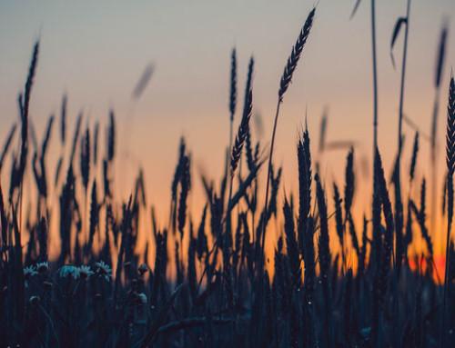 Anacer, import cerealicolo: crescono quantità e valori