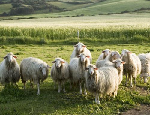 Legge emergenze in agricoltura, interrogazione parlamentare su chiarimenti sui tempi di emanazione