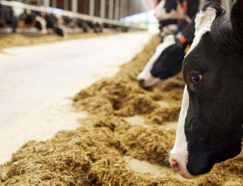 Müller incentiva ulteriori miglioramenti della salute e del benessere dei bovini