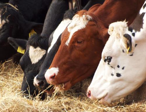 """Percezione del """"Benessere animale positivo"""" da parte dei cittadini e degli allevatori e sue implicazioni nella comunicazione"""