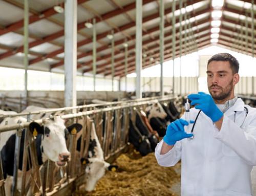 EMA, accesso pubblico a segnalazioni di effetti collaterali sospetti di medicinali veterinari