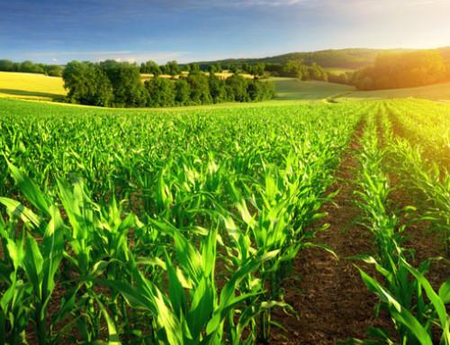 ConAgritech Startup Challenge, Corteva Agriscience™ premia idee innovative per un'agricoltura sostenibile