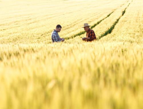 Calabria, Psr: oltre 14 milioni di Euro erogati agli agricoltori