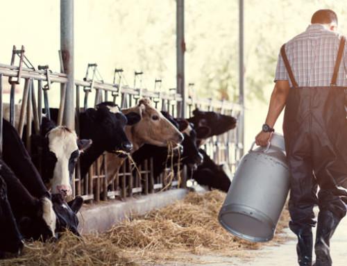 """Veneto, latte: Pan """"Più controlli sulla filiera, in tempo di crisi prosperano approfittatori e speculazioni"""""""