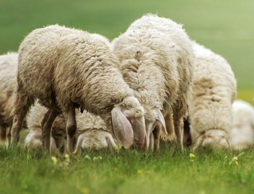 Toscana – 3 milioni di risorse regionali per il latte ovi-caprino