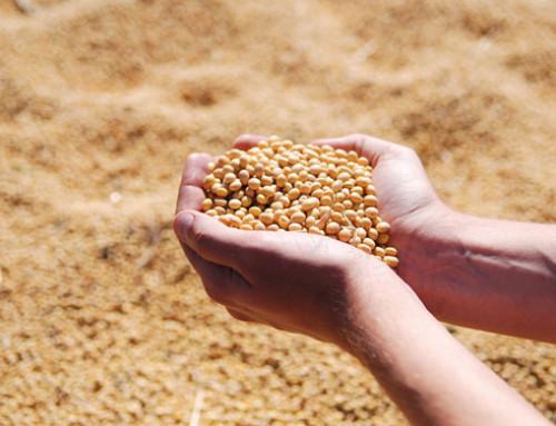 Nuovo metodo ad alta precisione per misurare i pesticidi nella soia