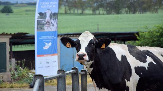 Roma porte aperte in fattoria 1700 persone per il primo for Porte francesi della fattoria
