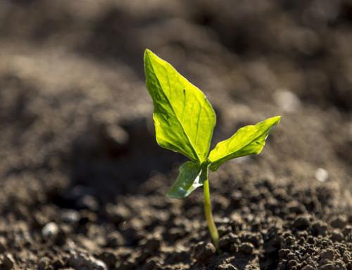 Criteri per la determinazione dei pagamenti e strumenti per la conversione dell'agricoltura biologica – Rapporto preliminare