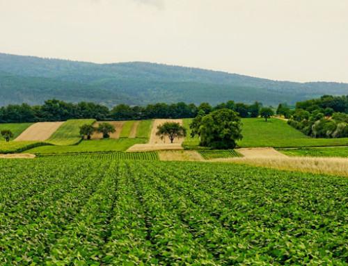Le filiere agroalimentari nelle regioni italiane