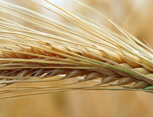 Anacer: l'import e export cerealicolo in Italia nei primi dieci mesi del 2019