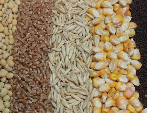 Anacer: Import/export cerealicolo in Italia nel primo mese del 2019