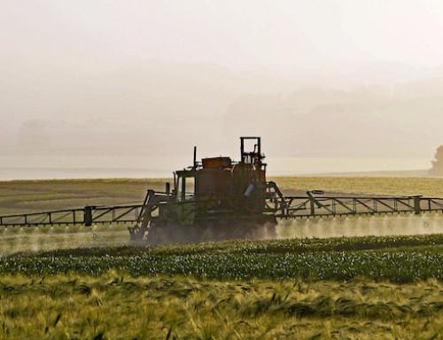 Residui di pesticidi negli alimenti: com'è la situazione nell'UE?