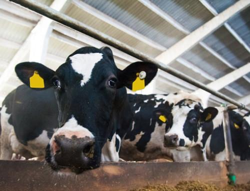 """Corso del Polo di Formazione per lo Sviluppo Agro Zootecnico: """"Benessere animale"""""""