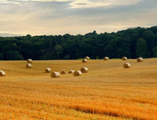 Paolo De Castro negozierà bilancio UE 2020 per la Commissione Agricoltura del Parlamento Europeo