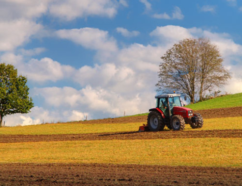 Ismea, Banca Nazionale delle Terre Agricole: al via il terzo bando