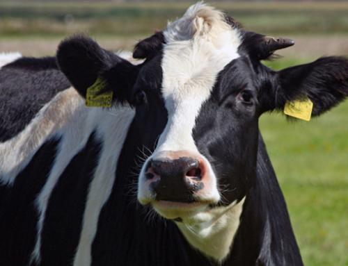 Valutazione comparativa di 3 metodi per la quantificazione degli acidi grassi non esterificati (NEFA) nel plasma bovino campionato nel pre-parto