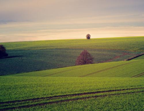 Annuario dell'agricoltura italiana: CREA ha presentato l'edizione 2017