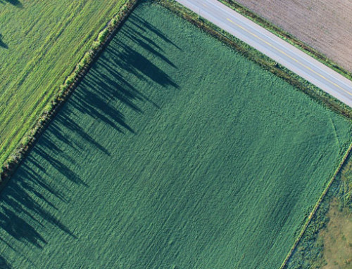 Regione Veneto – Agricoltura: giunta approva bandi per 34,2 mln per PSR, biodiversità e ripristino foreste