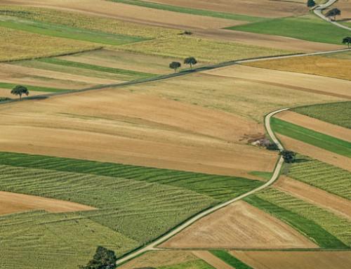 Lazio, agricoltura: un milione di euro per i progetti di filiera agroalimentare