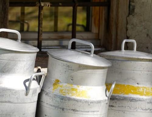 In calo il prezzo del latte spot in Italia